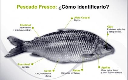 pescado olor